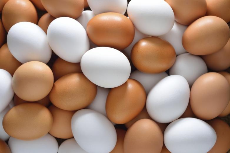 კვლევამ აღმოაჩინა, რომ 1 კვერცხის ჭამა დღეში ისეთივე საზიანოა, როგორც 5 ღერი სიგარეტის მოწევა!