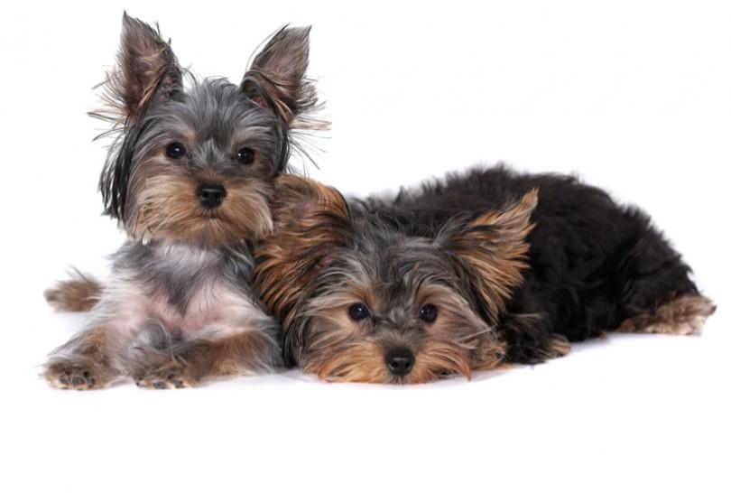 ძაღლი თუ ცოცხი? – უცნაურმა შინაურმა ცხოველმა ინტერნეტი დაიპყრო