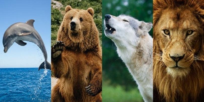 როგორია თქვენი იდეალური დღე – ვინ ხართ, დათვი, ლომი, მგელი თუ დელფინი