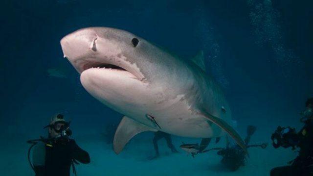 საფრანგეთის კუნძულზე ზვიგენის კუჭში დაკარგული მამაკაცის ხელი იპოვეს