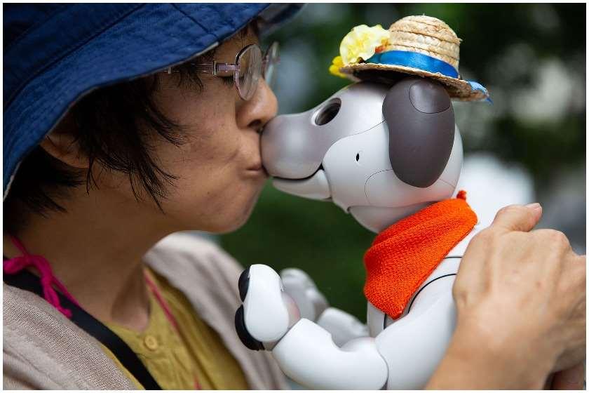 იაპონიაში რობოტი ძაღლებისთვის მფლობელები გასართობ საღამოებს აწყობენ