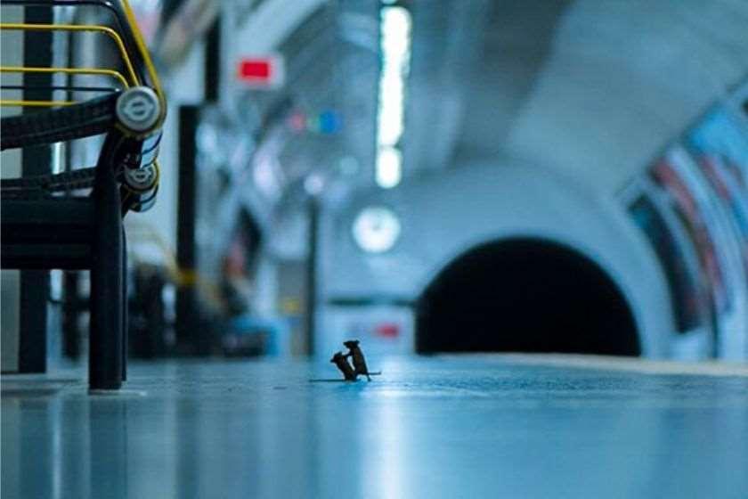 ლონდონის ბუნების ისტორიის მუზეუმმა ველური ბუნების საუკეთესო ფოტო გამოავლინა