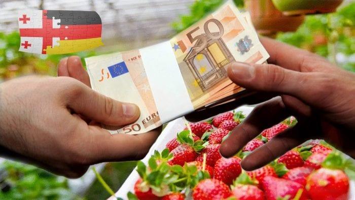 რამდენ ევროს გამოიმუშავებენ გერმანიაში სეზონურ სამუშაოზე დასაქმებულები
