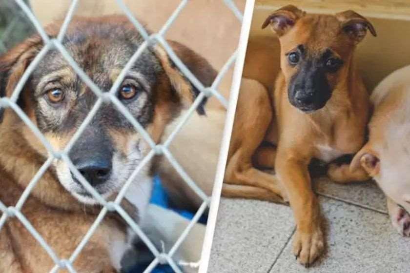 ავსტრალიაში ცხოველთა მჩაგვრელებს $44,000-ის გადახდა და ციხეში 1 წლის გატარება მოუწევთ